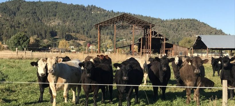 Pasture raised beef is perfect for digital marketing!
